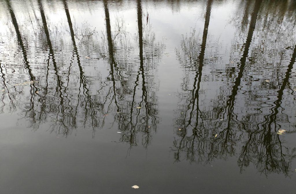 Bomen zonder blad spiegelen in het water