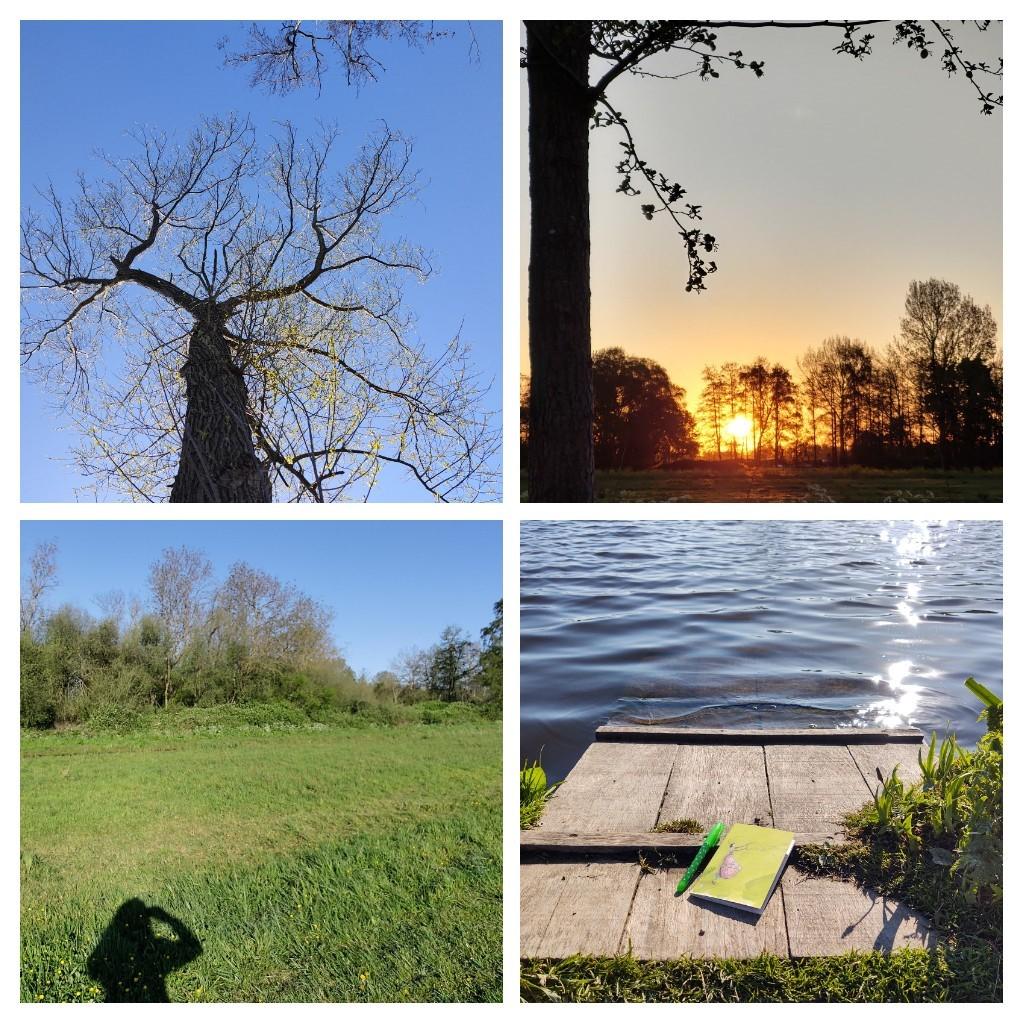 Collage van vier foto's: boom tegen blauwe lucht, zonsopkomst, grasveld met vele tinten groen, steiger aan het water met pen en schrijfblok